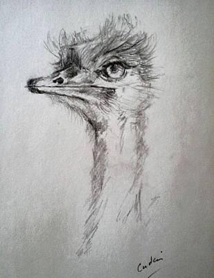 Drawing - Ostrich by Debora Cardaci