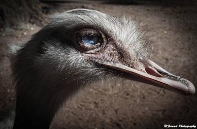 Photograph - Ostrich by Debra Forand