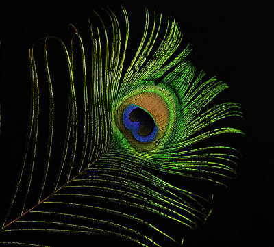 Photograph - Ostrich Feather Tip Eye by Douglas Barnett
