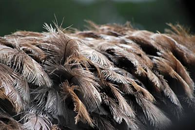 Ostrich Feathers Art Print by Teresa Blanton