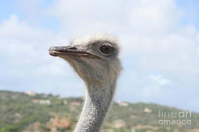 Ostrich Photograph - Ostrich Head II by Thomas Marchessault