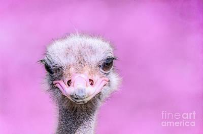 Photograph - Ostrich Head by Shaun Wilkinson