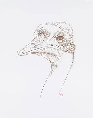 Drawing - Ostrich by Karen Robey