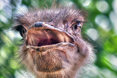 Photograph - Ostrich by Nadia Sanowar