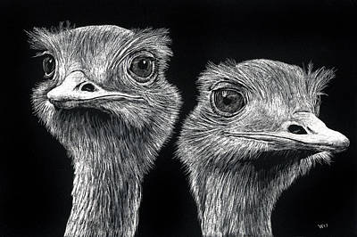 Drawing - Ostrich Pair by William Underwood