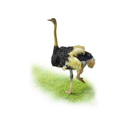 Painting - Ostrich by Tatiana Tyumeneva