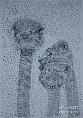 Drawing - Ostrich Umbrella by David Joyner