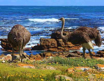 Wildlife Photograph - Ostriches At The Cape Of Good Hope by Stacie Gary