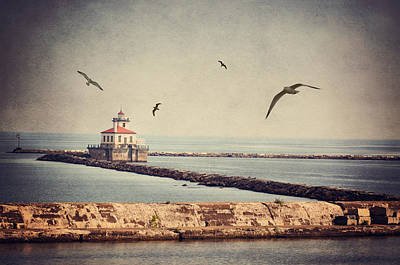 Photograph - Oswego Seagull by Emily Stauring