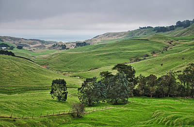 Photograph - Otago Peninsula II - New Zealand by Steven Ralser
