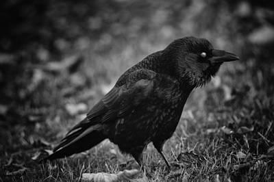Crow Photograph - Other World by Owen Calvert