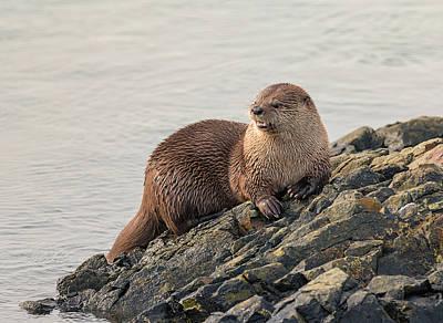 Photograph - Otter Ashore by Loree Johnson