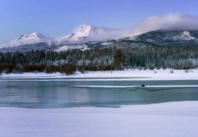Photograph - Otter At Black Butte by Cat Connor