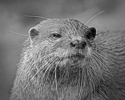 Photograph - Otter by Carol Bradley