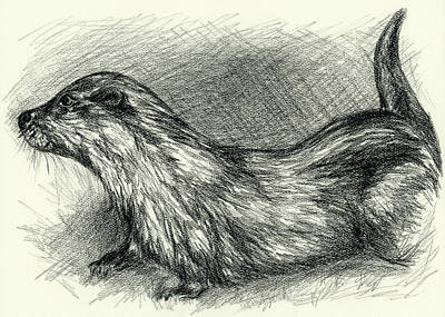 Otter Drawing - Otter In Charcoal by MM Anderson