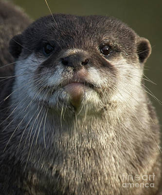 Little Mosters - Otter Looking At You by MSVRVisual Rawshutterbug