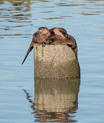 Photograph - Otter Love by Loree Johnson