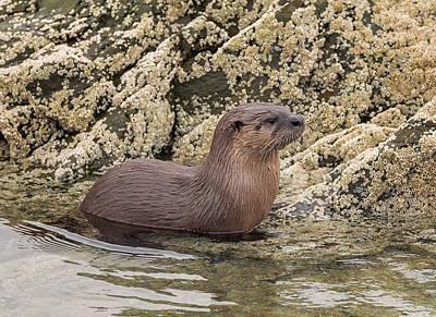 Photograph - Otter Portrait by Loree Johnson