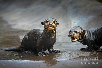 Otter Photograph - Otter Pup Pair by Jamie Pham