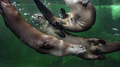 Photograph - Otter Traffic Jam by Greg Nyquist