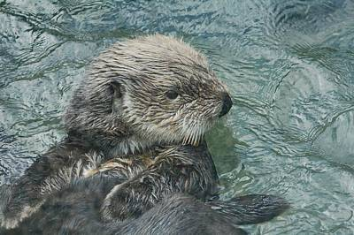 Photograph - Otter Zen 2 by Fraida Gutovich