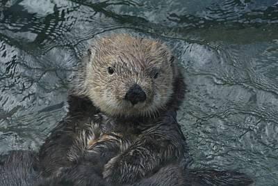 Photograph - Otter Zen by Fraida Gutovich