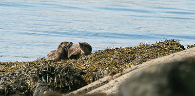 Photograph - Otters by Wendy Cooper