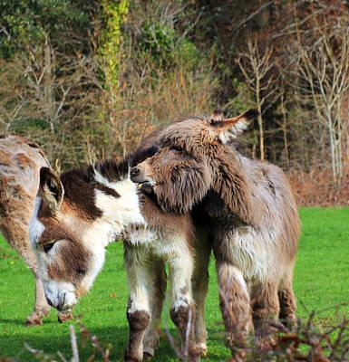 Donkeys Photograph - Ouch by Jennifer Robin