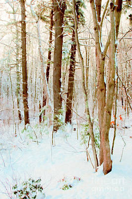 Photograph - Our Backyard After The Snow by Anita Pollak