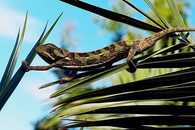 Photograph - Our Chameleon 03 by Dora Hathazi Mendes