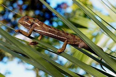 Photograph - Our Chameleon 04 by Dora Hathazi Mendes