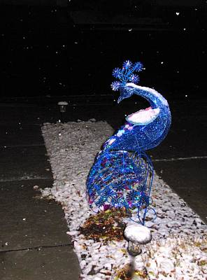 Photograph - Our Christmas Peacock by Phyllis Kaltenbach