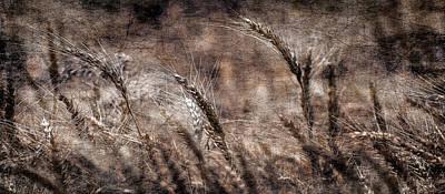 Photograph - Our Daily Bread by Garett Gabriel