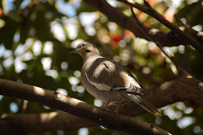 Photograph - Our Friendly Doves by George Olney