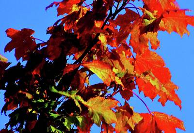 Photograph - Our Garden In Autumn by Nik Watt