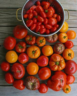 Photograph - Our Homegrown Tomatoes by Polly Castor