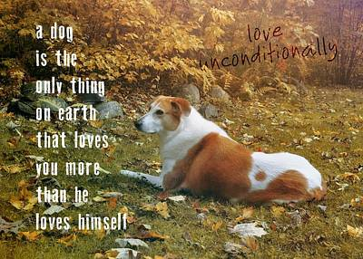 Photograph - Our Pooch Quote by JAMART Photography
