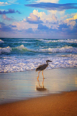 Photograph - Out For A Stroll by Debra and Dave Vanderlaan