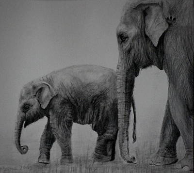 Elephant Pencil Drawing Drawing - Out For A Stroll by Lynn Hughes