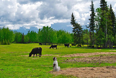 Photograph - Out In The Pasture by Cathy Mahnke