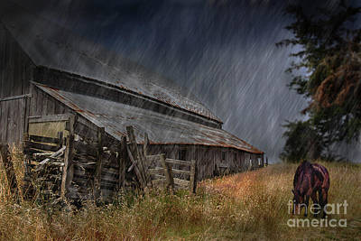 Photograph - Out In The Storm by Joann Long