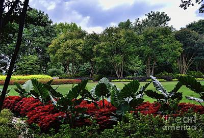 Photograph - Out My Back Door by Diana Mary Sharpton