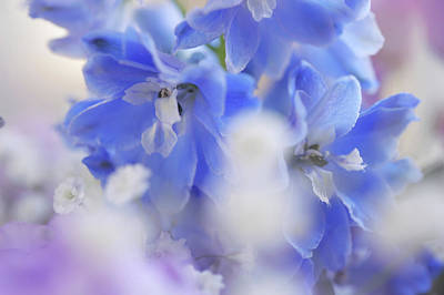 Photograph - Out Of Blue. Dreamy World by Jenny Rainbow