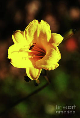 Photograph - Out Of Darkness Into Light by Linda Shafer