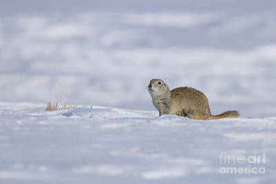 Photograph - Out Of Hibernation by Alyce Taylor