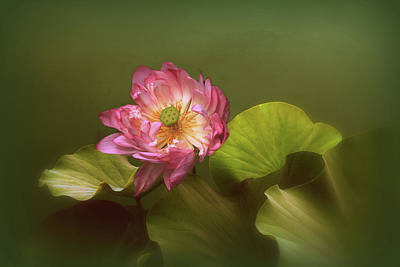 Pink Water Lily Photograph - Out Of The Mist by Jessica Jenney