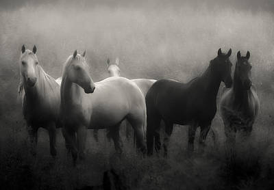 Horses Photograph - Out Of The Mist by Ron  McGinnis