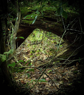 Photograph - Out Of The Rabbit Hole Into The Light by Douglas Barnett