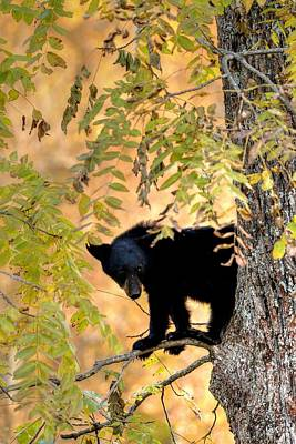 Wilderness Camping - Out On A Limb by Carol Montoya