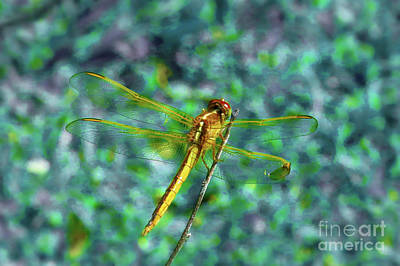 Insects Photograph - Out On A Limb by Scott Cameron